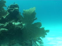 Underwater diving video. Sea life underwater diving video stock footage