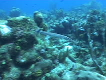 Underwater diving video. Sea life underwater diving video stock video