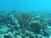 Underwater diving video sealife ocean. Underwater diving video nature landscape stock video footage