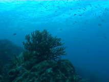 Underwater diving video sealife ocean. Underwater diving video nature landscape stock footage