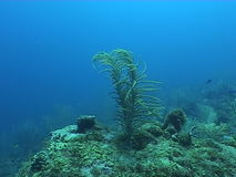Underwater diving video sealife ocean. Underwater diving video nature landscape stock video