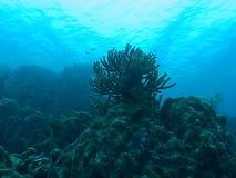 Underwater diving video sealife ocean stock video footage