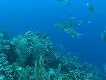 Underwater diving video sealife ocean stock footage