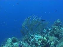 Underwater diving video sealife ocean stock video