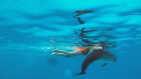 Underwater Dolphin playing with a child stock footage