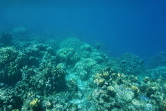 Underwater edge of coral reef down to the abyss Stock Image