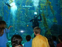 Underwater Education Royalty Free Stock Images