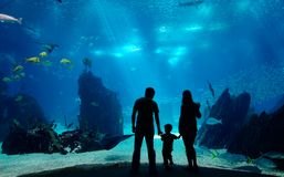 Underwater family. Silhouettes of young family of three enjoying views of underwater life. Family having free time in Oceanarium Stock Image