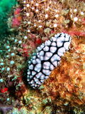 Underwater fauna. A beautiful background of marine life under the sea Stock Image