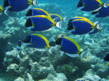 Underwater fish. Underwater background with blue fish stock images