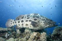 Underwater fish in Australia, a wonderful life, how strange it looks Royalty Free Stock Image