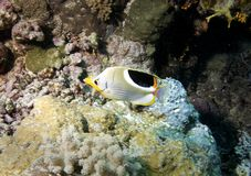 Underwater fish in Australia, a wonderful life Royalty Free Stock Photography