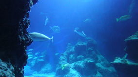 Underwater Fish and Rays stock video footage