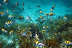Underwater fish school swim on coral reef Stock Photo