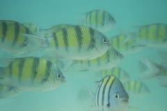 Underwater fish shoal Royalty Free Stock Photo