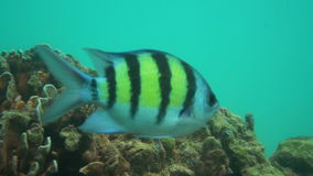 Underwater fish shoal stock video footage