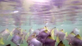Underwater fish shot. Flock of fish swimming towards light stock video footage
