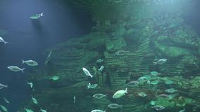 An Underwater Fish Swimming stock footage