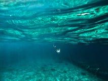 Underwater focused jellyfish Royalty Free Stock Image