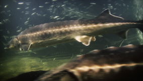 Underwater footage of exotic fishes, stock footage stock footage