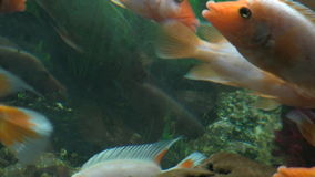 Underwater footage of exotic fishes, stock footage stock video