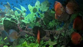 Underwater footage of exotic fishes, stock footage stock video footage
