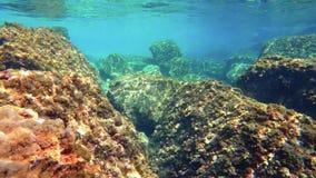 Underwater footage with GoPro Hero 5 Black, 4k.  stock video footage