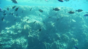 Underwater footage of sea life. Red Sea, Egypt stock video footage
