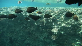 Underwater footage of sea life. In tropical waters of Egypt, Red Sea stock video footage