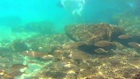 Underwater footage stock video