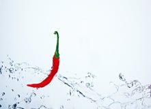 Underwater frio picante Imagem de Stock Royalty Free