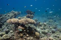 In underwater garden Stock Image