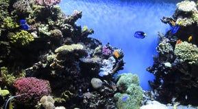 Underwater garden Stock Image