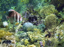 Underwater Garden, Great Barrier Reef, Australia. Corals and tropical fish at the Low Isles reef, part of the Great Barrier Reef system in far north Queensland Stock Photo