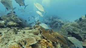 Underwater getaway. A shot underwater of the beautiful sea creatures. A mixture of big and small school of fish swims freely. Divers interacts with the creatures stock video footage