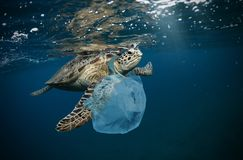 Underwater global problem with plastic rubbish. Underwater concept of global problem with plastic rubbish floating in the oceans. Hawksbill turtle in caption of royalty free stock images