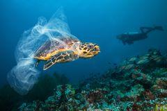 Underwater global problem with plastic rubbish. Underwater concept of global problem with plastic rubbish floating in the oceans. Hawksbill turtle in caption of royalty free stock image
