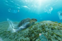 Underwater global problem with plastic rubbish. Underwater concept of global problem with plastic rubbish floating in the oceans. Hawksbill turtle in caption of stock photography