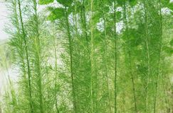 Underwater green plants, green plants background stock photography