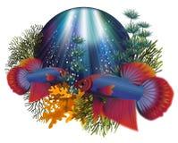 Underwater greeting card with Betta Splendens Thai fighting fish. Vector illustration Stock Photo