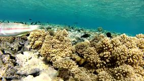 Underwater house. Coral reef. Of the red sea. Depth from 2 to 10 meters. This camera. Summer. Clean water. Beautiful Coral Reef. Snoring stock footage