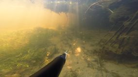 Underwater hunter Beautiful Astrakhan Caspian fresh water. Sun lights stock video footage