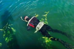 Underwater hunter. Royalty Free Stock Photo