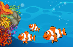 Underwater. Illustration of clown fish swimming underwater Stock Image