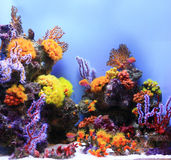Underwater Image of Aquarium Royalty Free Stock Image