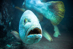 Underwater image of coral reef and Fish Stock Photo