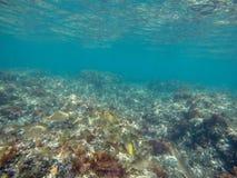 Underwater image Las Rotas nature reserve Denia Alicante Spain royalty free stock image