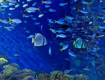 Underwater Image Of Fishes Stock Photo