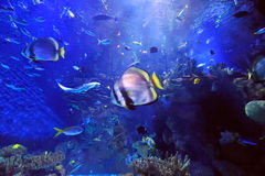 Underwater Image Of Reef And Fishes Stock Photography