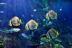 Underwater image of reef and fishes royalty free stock photos